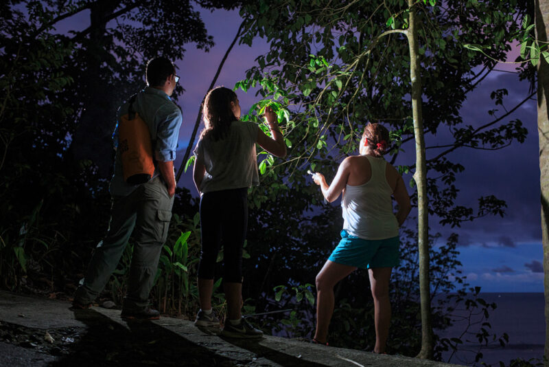 The forest comes alive as soon as the sun sets. During the nightwalk at ADM private reserve is easy to find kinkajous, red eye tree frogs and all kind of nocturnal species. - Arenas del Mar | Cayuga Collection